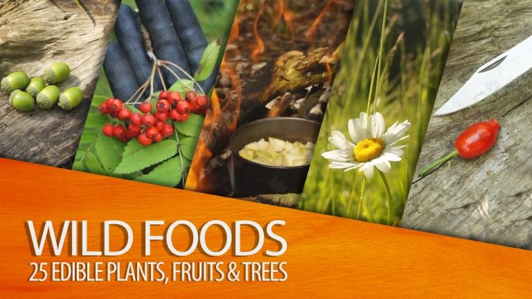 25 Edible Plants, Fruits and Trees for Wilderness Survival